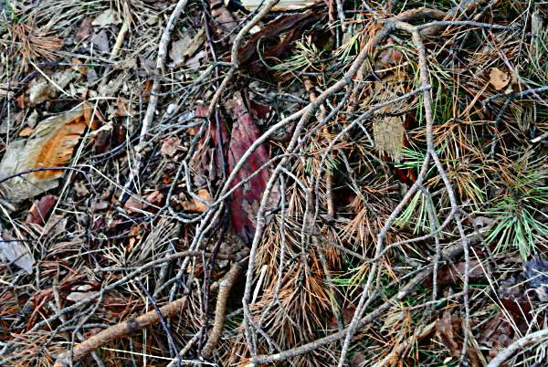 Röda sten och kalhygget 058